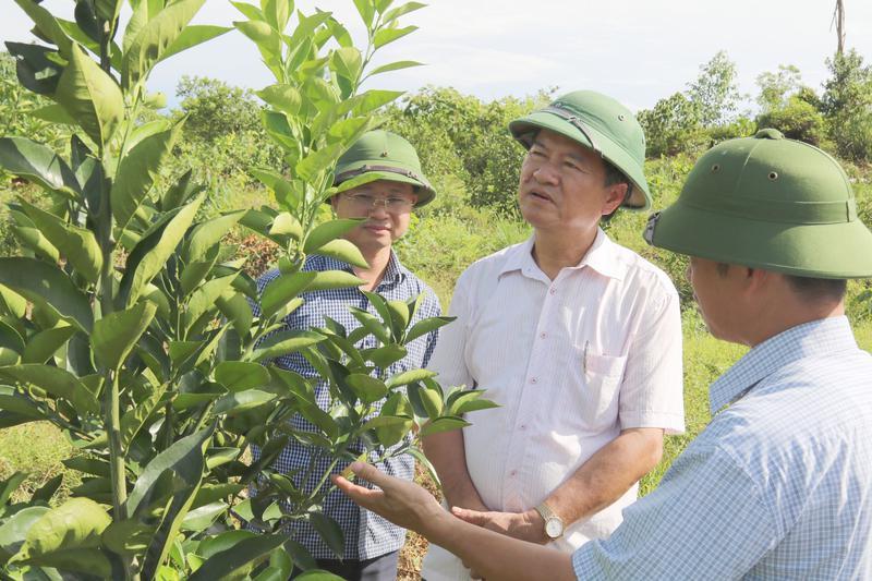 Xây dựng mô hình trồng cam hiệu quả cao và bền vững tại Vũ Quang