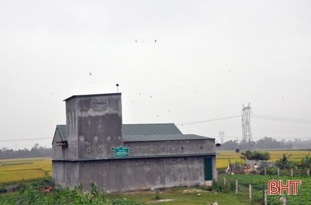 Chim yến được nuôi thành công tại Hà Tĩnh